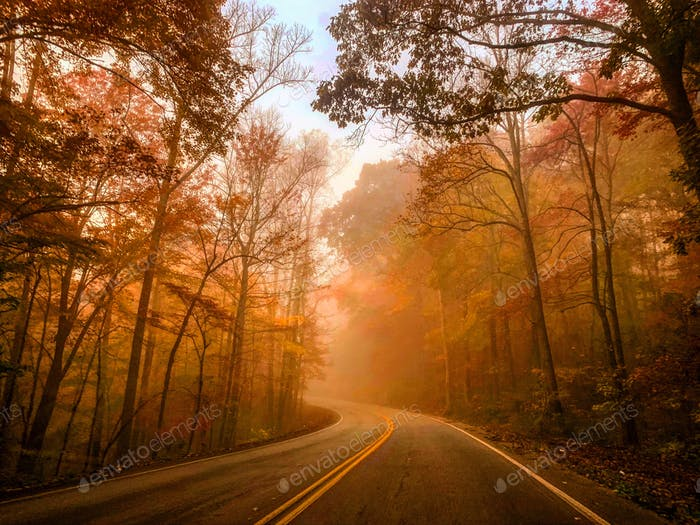 Foggy Road in Tennessee