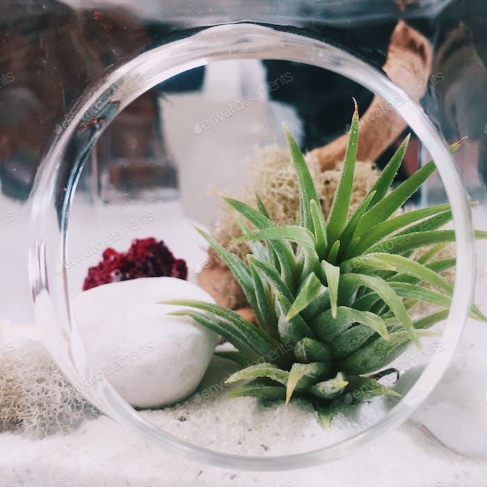 Tiny terrarium.