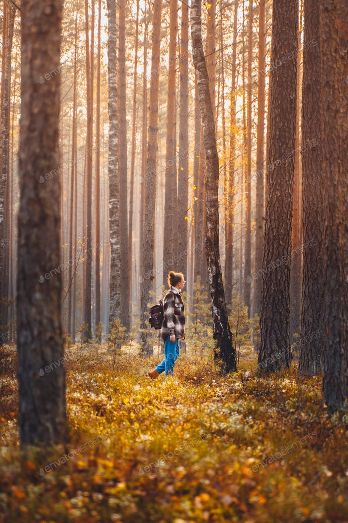 Woman hiking at high trees in forest at fall season