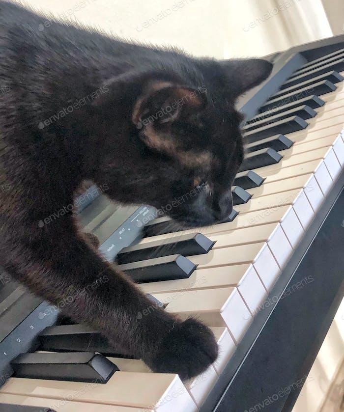 Haustiere benehmen sich wie Menschen Kitty auf Die Keys