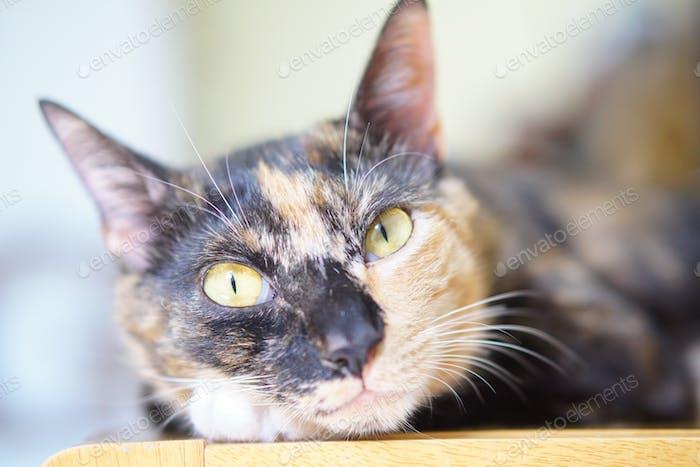 Lazy cat stare