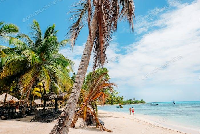 Caribbean beach with palm trees