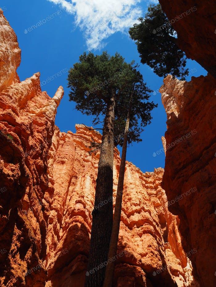 Bryce Canyon Impression