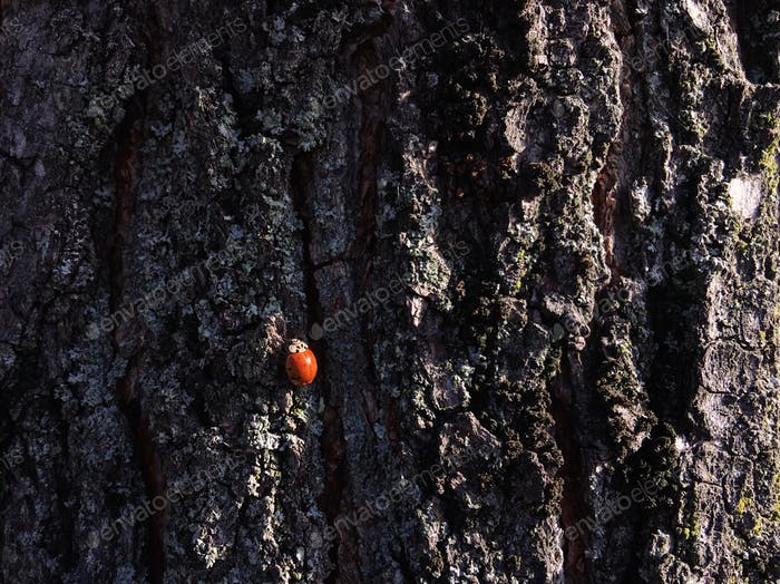 Lady bug on a tree...