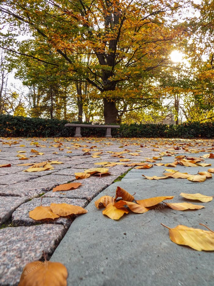 Windblown autumn leaves in a deserted city park - autumn lifestyle