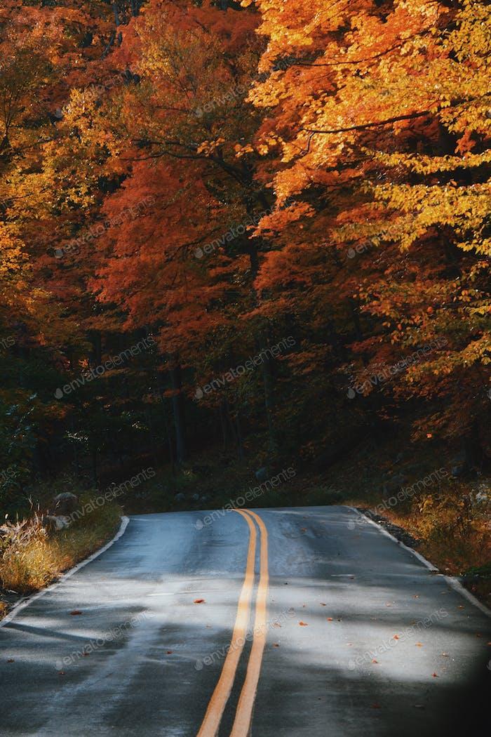 Cayendo para el otoño