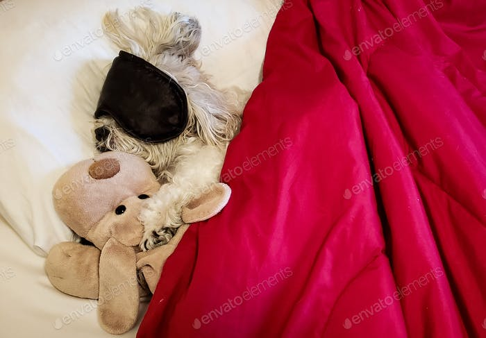 Little princess sleeping with her fiance who appears to be very cuddly...