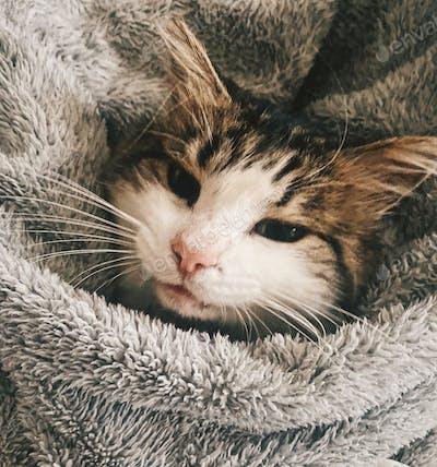 Indoors cat portrait