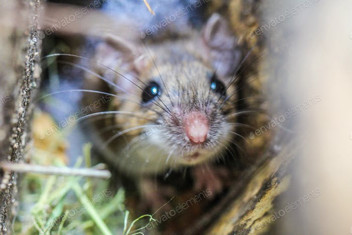 A mouse looking up through a bird house