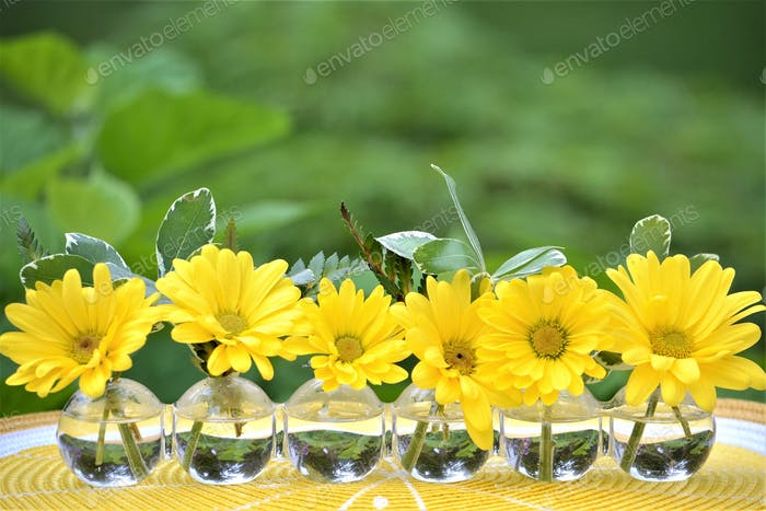 Yellow flowers!! #flowersphotography #flowersphoto #flowerstalking #flowerday #flowersday