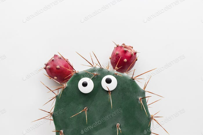Funny face prickly pear cactus on a white background
