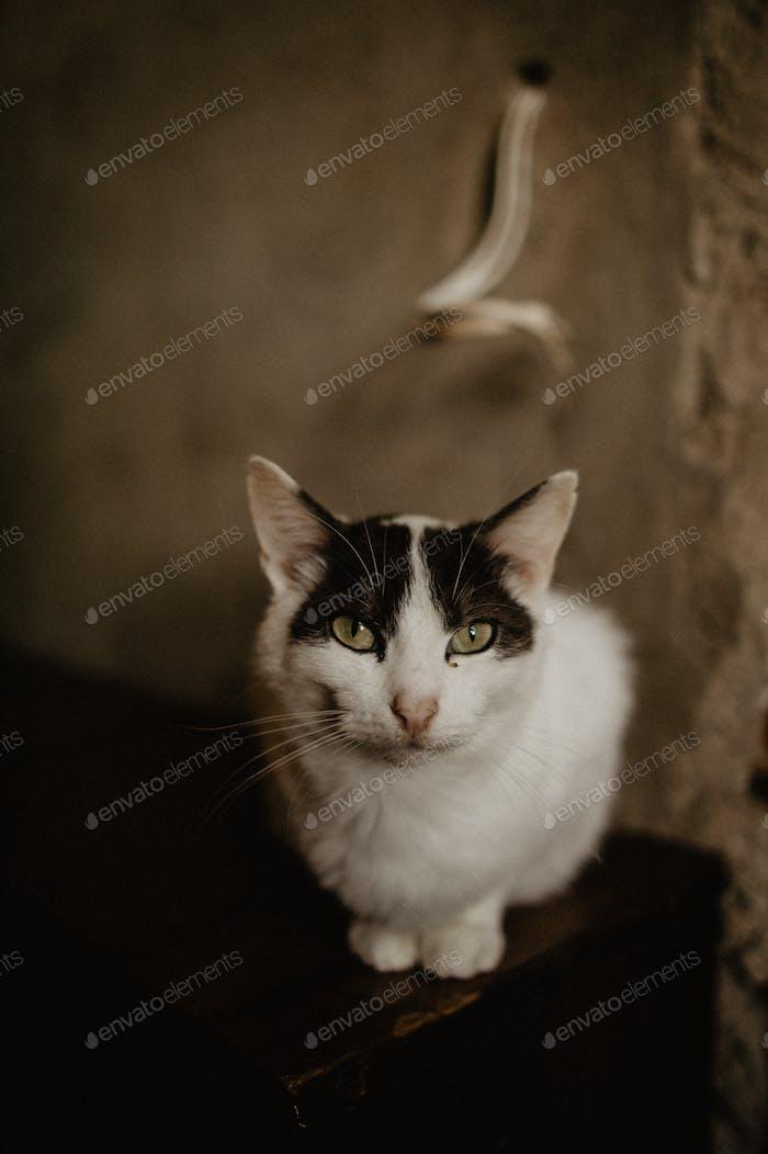 triste gato en refugio, ayudar a los animales, caridad, filantropía, rescate, personas sin hogar