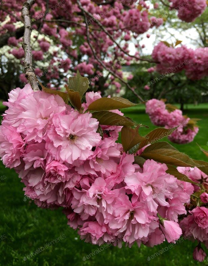 Beautiful delicate pink flowers.