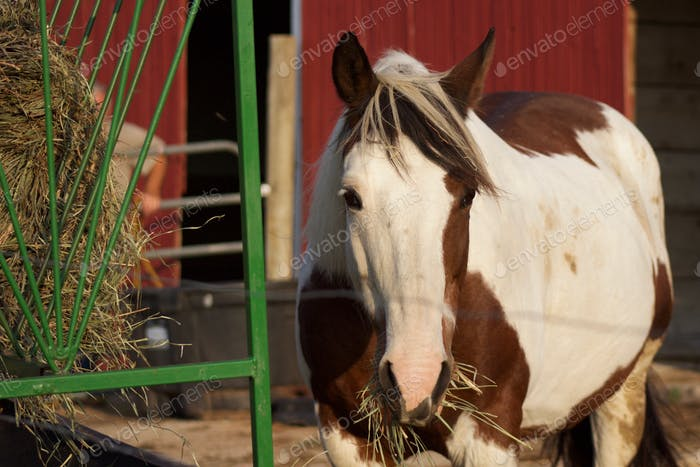 (nominated) A horse standing by a hay feeder in front of an open barn