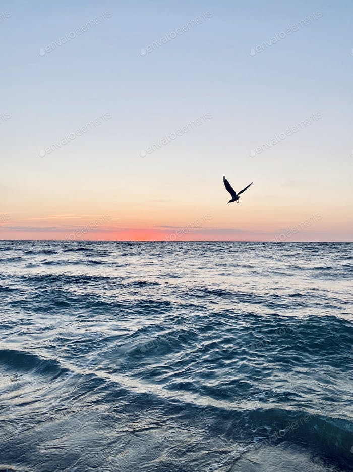 A seagull flying around the blue sea at sunrise
