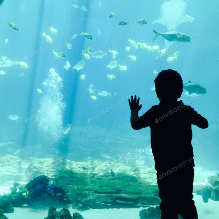 Kind im Aquarium