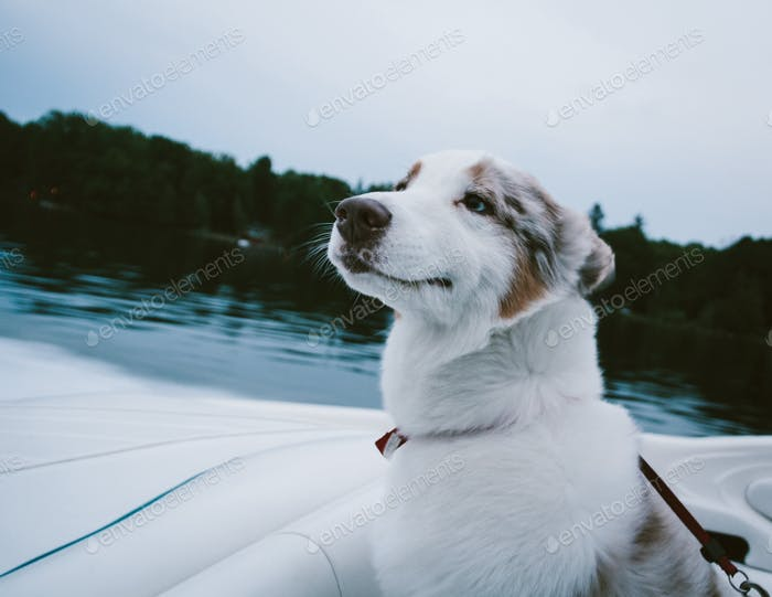 Smiling dog on a boat