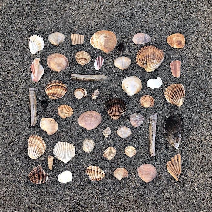Beach treasures - shell edition