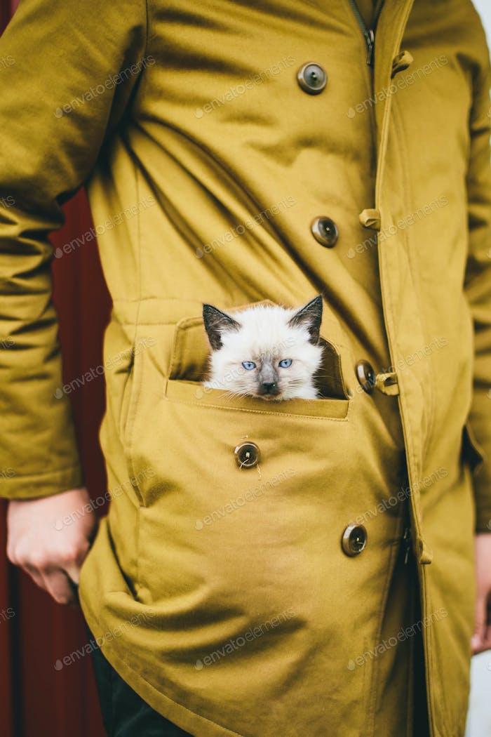 Kätzchen in der Manteltasche