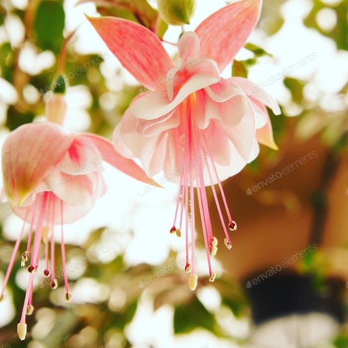 Bulto de flores