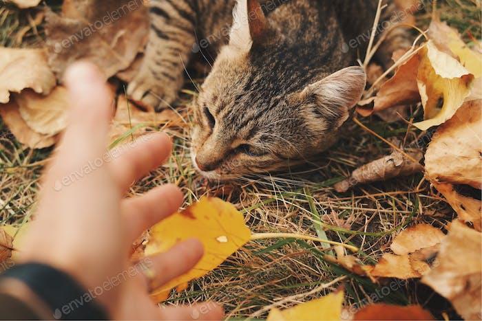 A furry autumn...