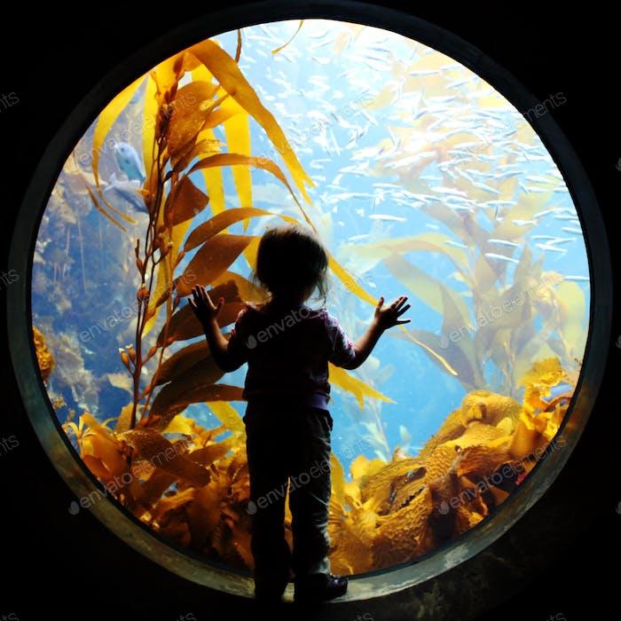 Aquarium-Silhouette.