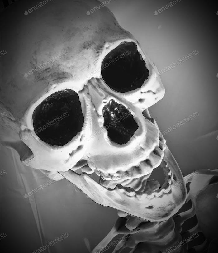 Scary Skull 💀