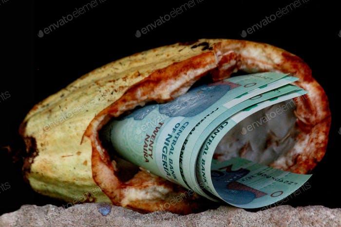 Reknopperernte für Kakaobauern im Naira-Land