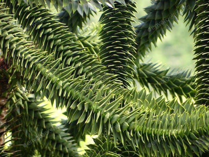 Follaje verde inusual.