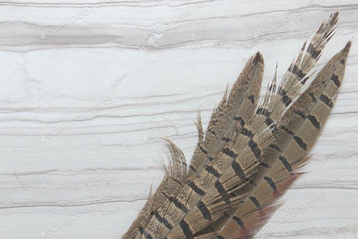 Pheasant border