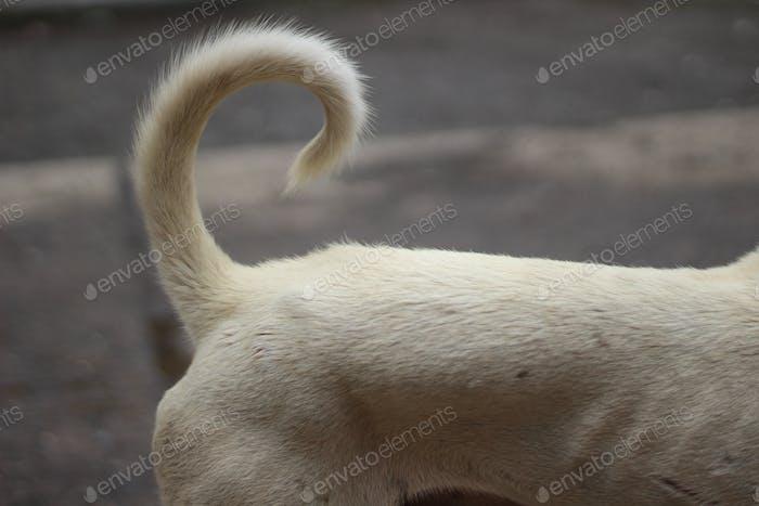 Hund-Schwanz