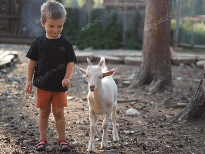 Cute toddler boy in black t-shirt and orange shorts standing near white baby goat