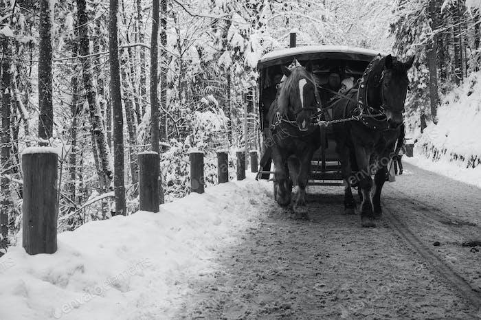horse cartridge in fussen, winter time