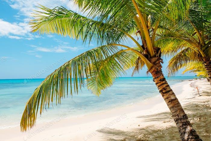 palm trees on Caribbean beach