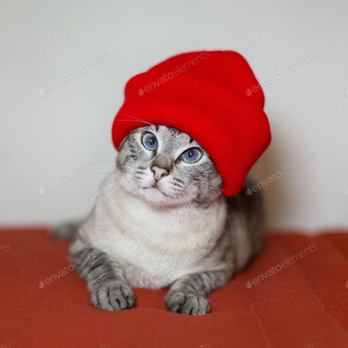 Red hat cat