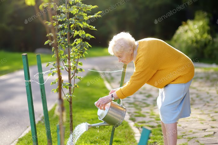 Senior, Frau, Freiwillige, Bewässerung, Gießkanne, Rentner, Baum, Dame, 70-75, Garten, 75-80, Alter,