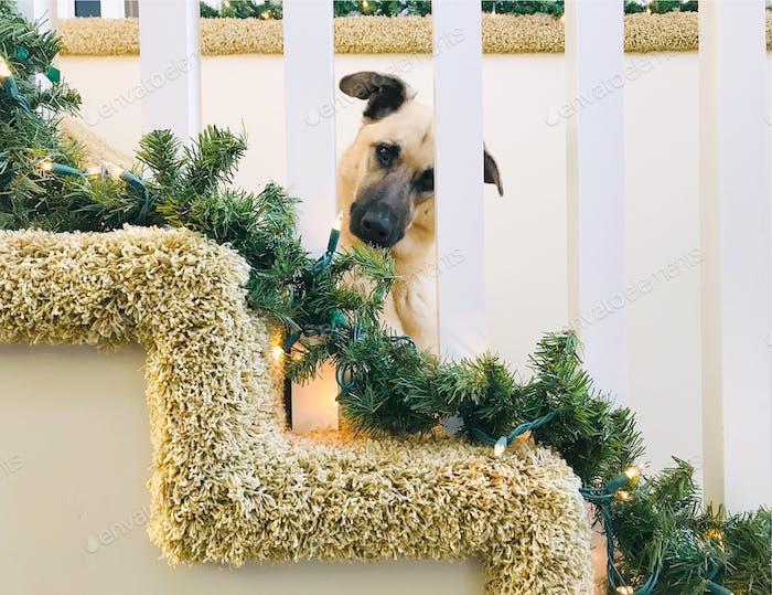 NOMINIERT Jemand versteckt sich auf der Treppe und versucht, einen Blick auf den Weihnachtsmann zu bekommen 🎅🏻