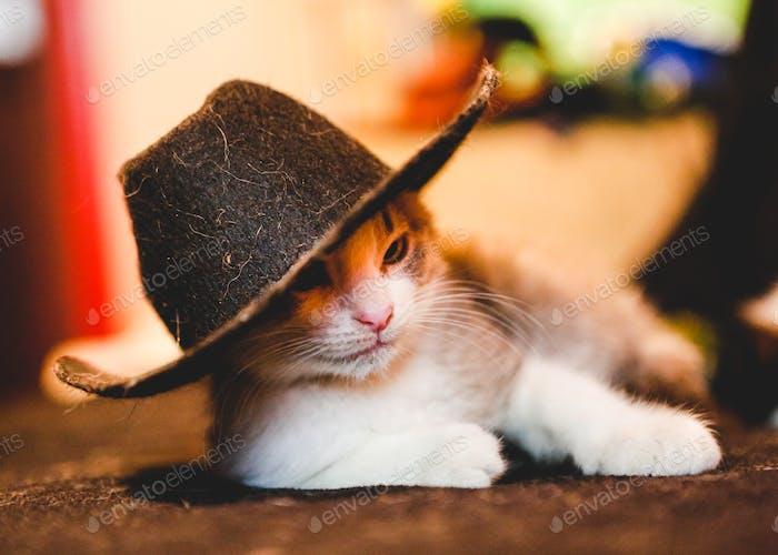 Cowboy Kitten
