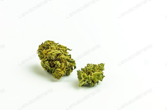 Cannabis buds isolated