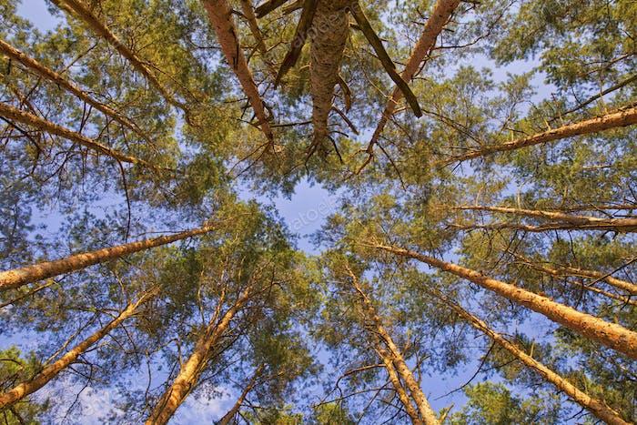 Bäume rund um