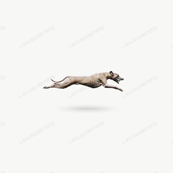 Keep on runnin'.