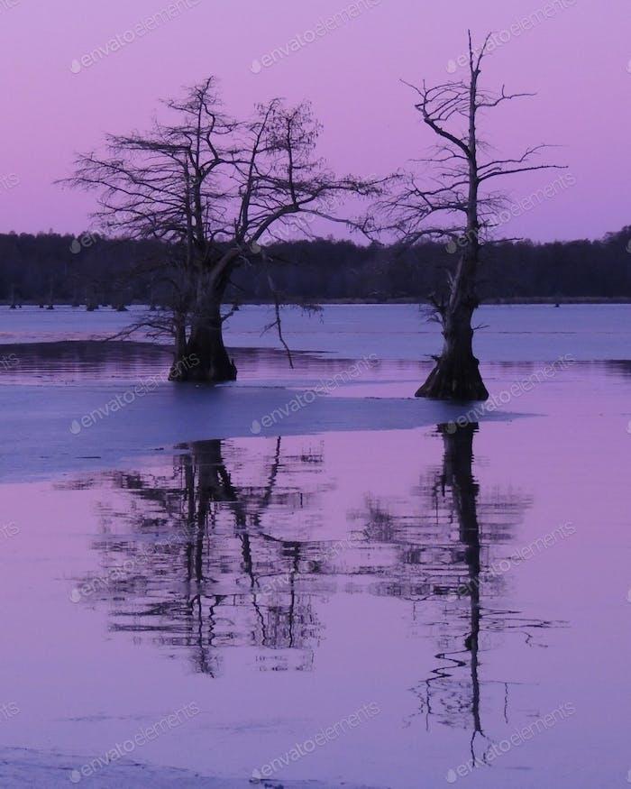 Sunrise, Reelfoot Lake TN