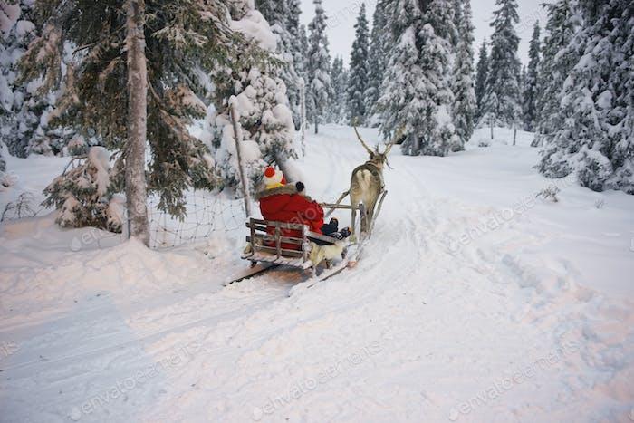 Winter Reindeer sled racing in Ruka in Lapland, Finland