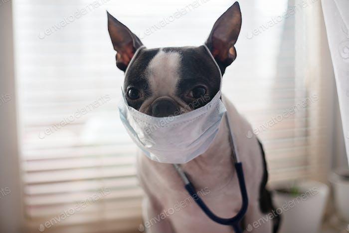 pet, clinic, care, canine, animal, dog, doctor, medicine, scientist, endemic, quarantine, bacteria,