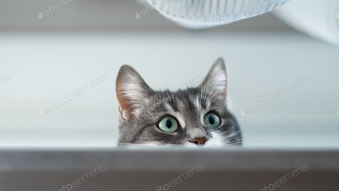 Cute kitty portrait face