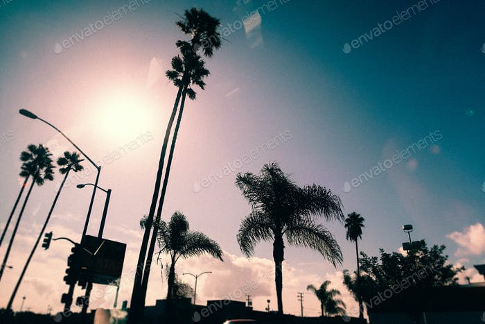 Cityscape with palm trees in California