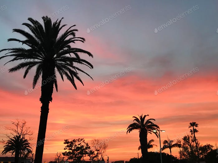 Cali sunset with silhouettes of palms