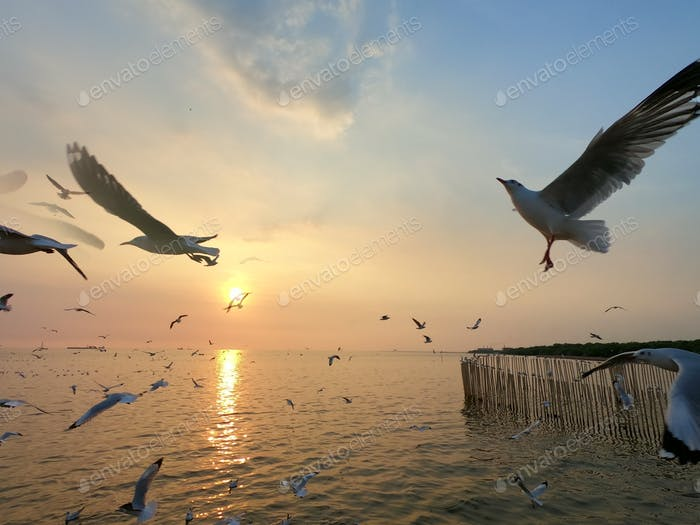 flock of seagulls flying over the sea in sunset.