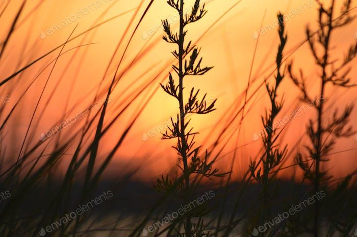 Sunset on Cape Cod Massachusetts. Our Earth.