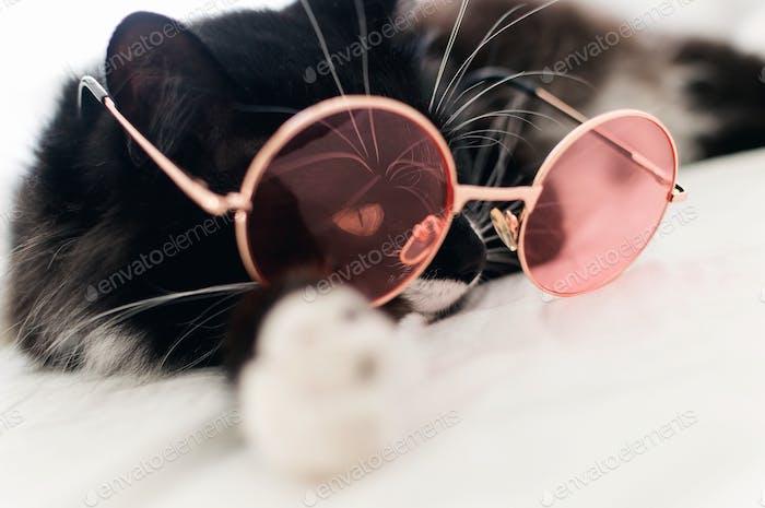 Optimistic cat